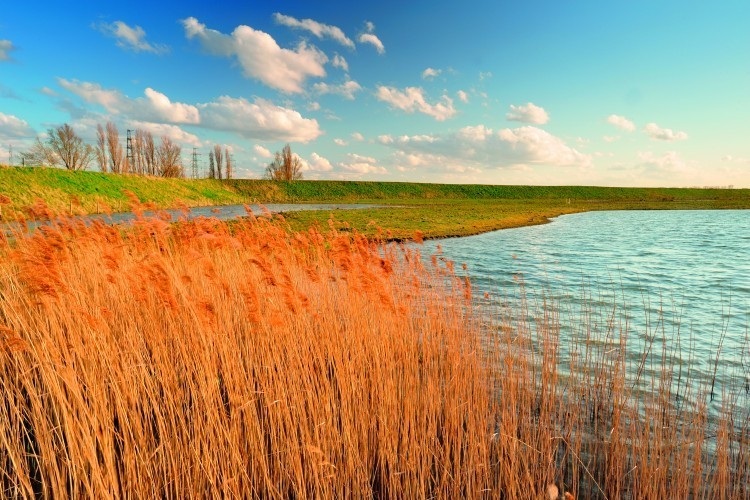 View of Brakke Kreek in the North Doel Polder